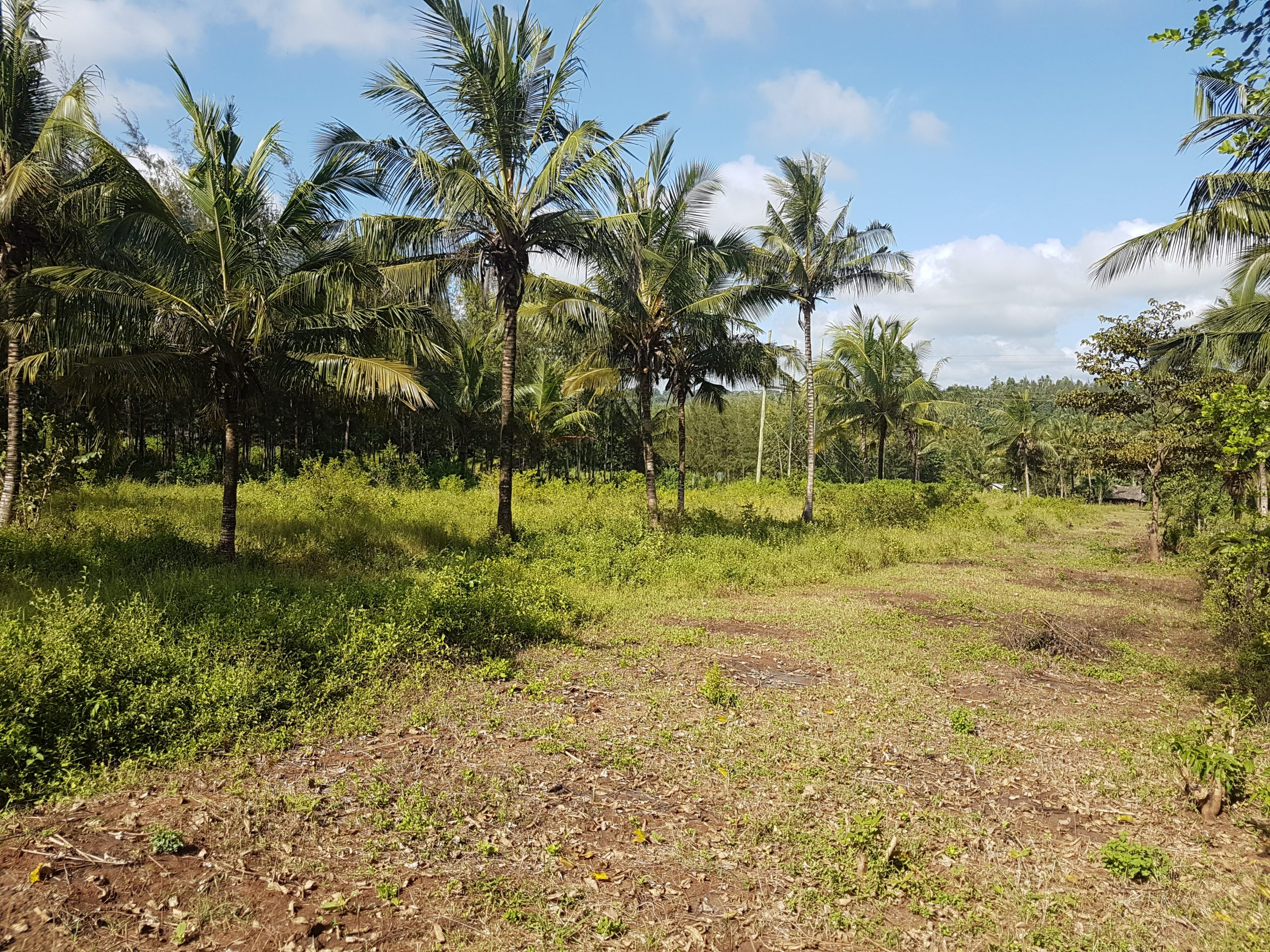 1/4 acre plots for sale in Vipingo