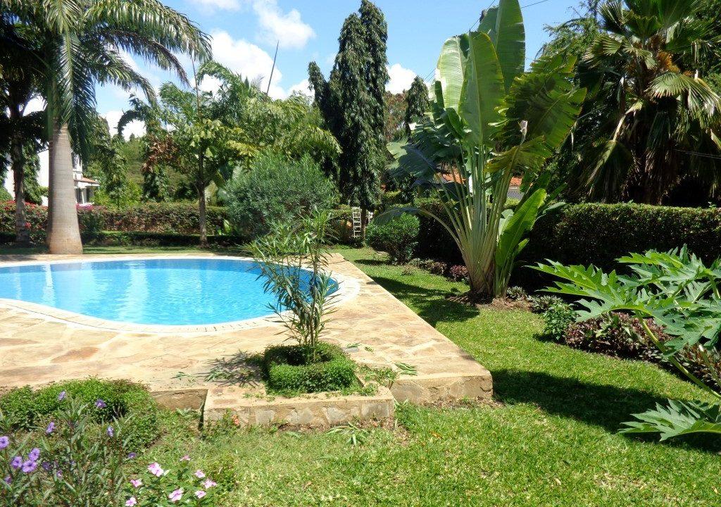 Palm Garden 22