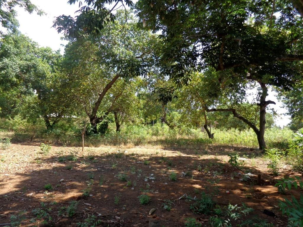 50*90 feet plots of land for sale in Majengo-Kikambala