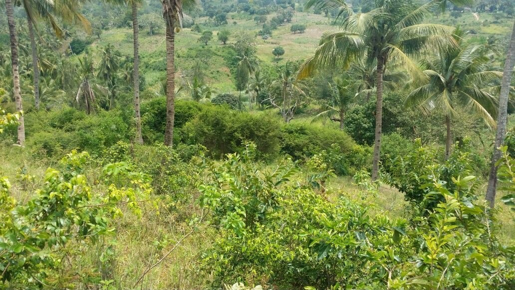 Plot of land for sale along vipingo ridge, 500 meter from Pazuri
